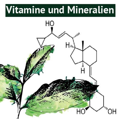 Bestandteil der Guayusa_Vitamine und Mineralien