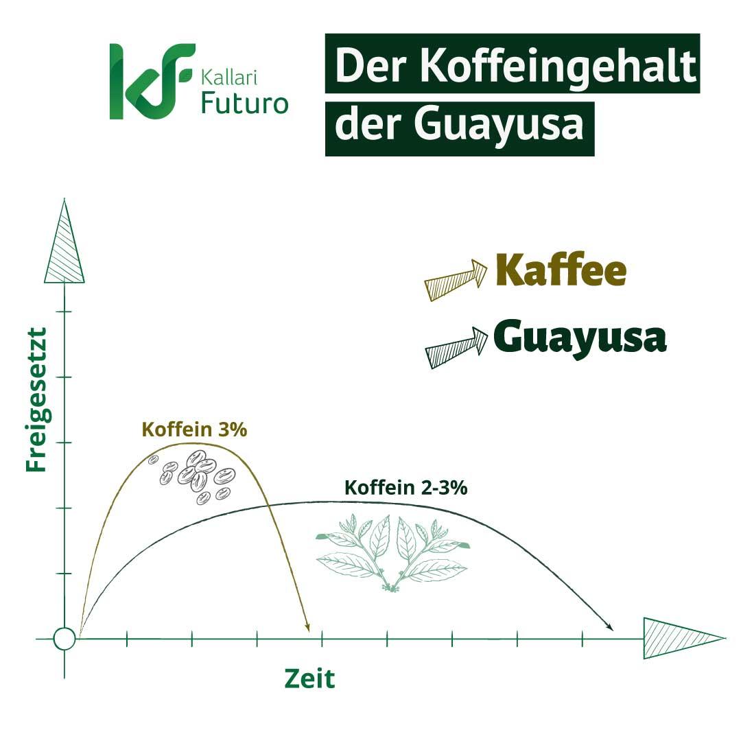 Der-Koffeingehalt-der-Guayusa