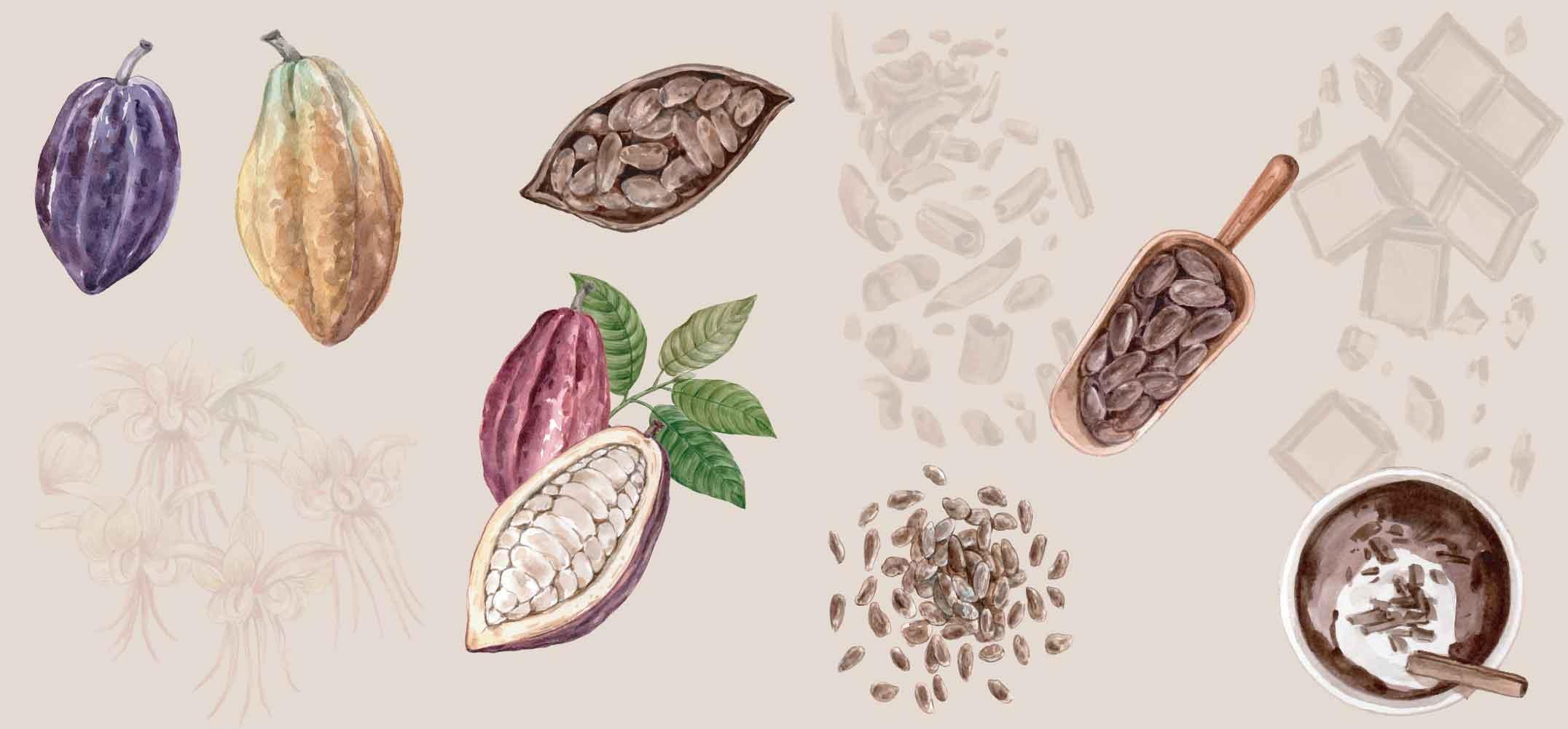 Der Ursprung der Kakaobohne