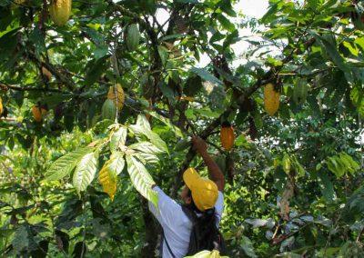Völker-in-Ecuador