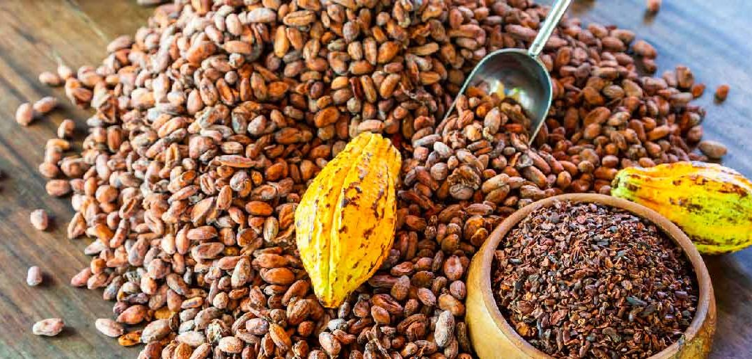 Kakaobohnen-aus-dem-Amazonas