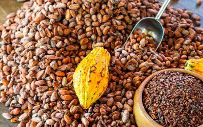 Die Kakao- und Edelkakaoproduktion in Zahlen