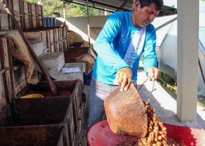 Kakaobohnen-fermentiert
