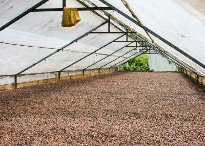 Kakaobohnen-getrocknet
